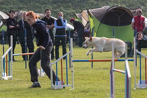 gallerien-agility_0000s_0023_0H5A6971