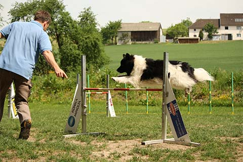 gallerien-agility_0000s_0028_IMG_1018