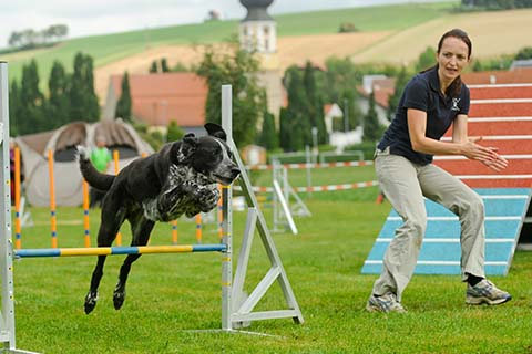 gallerien-agility_0000s_0029_DSC_2052