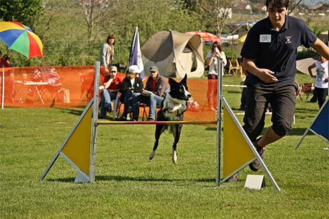 gallerien-agility_0000s_0030_Benja1
